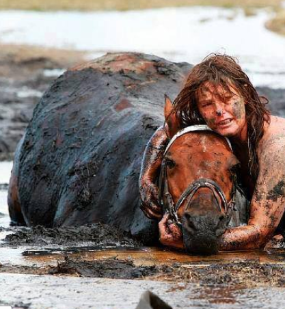 A woman's loyalty to her horse. Nicole Graham spent three hours holding her  horse's head above the tide after he got stuck in the… | Funny animals,  Animals, Horses