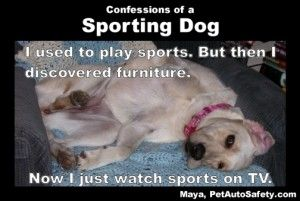 Sporting Dog Caption Heh Funny Dogs Dogs Funny Dog Memes