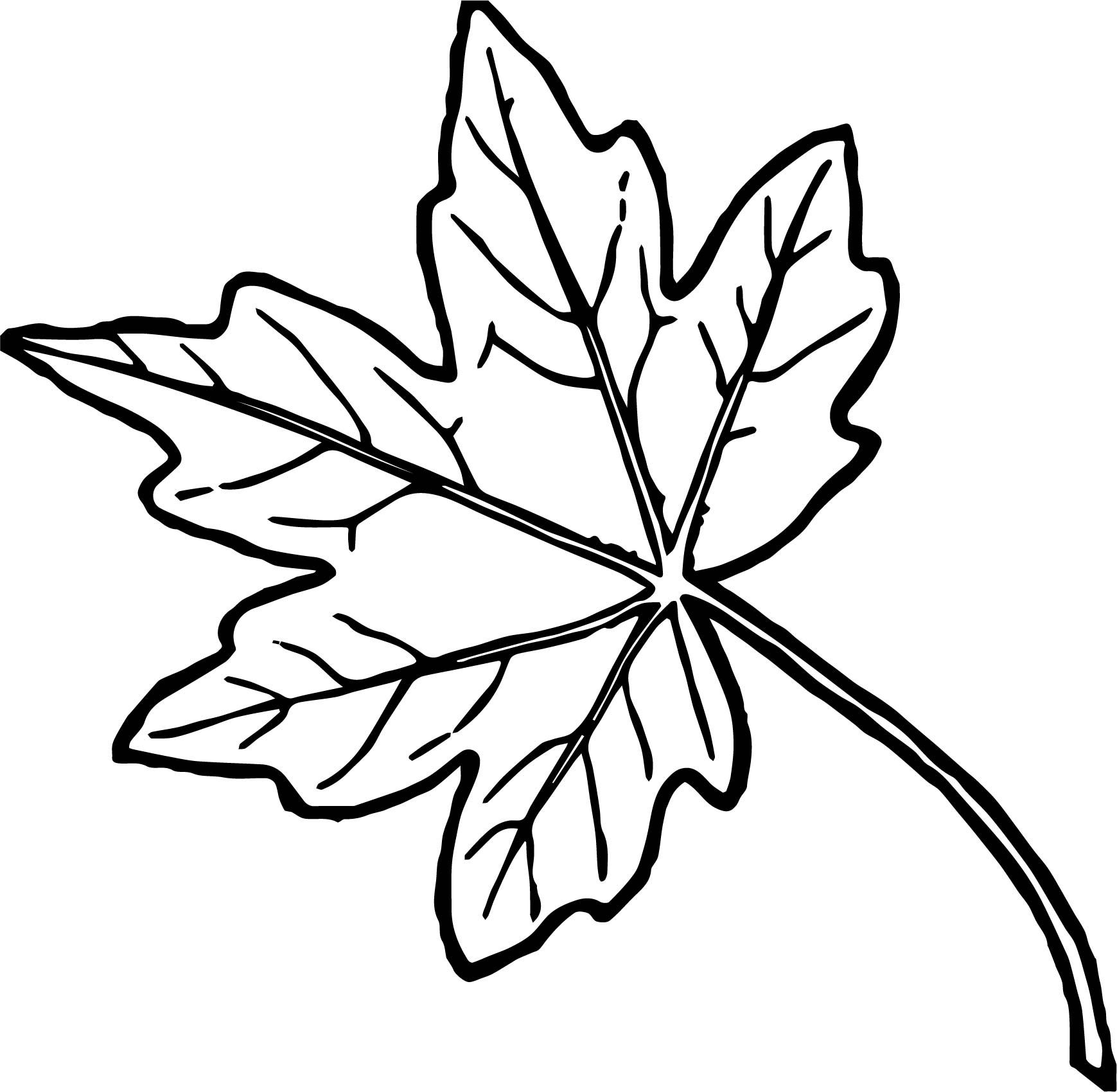 Awesome Just Autumn Leaf Coloring Page With Images