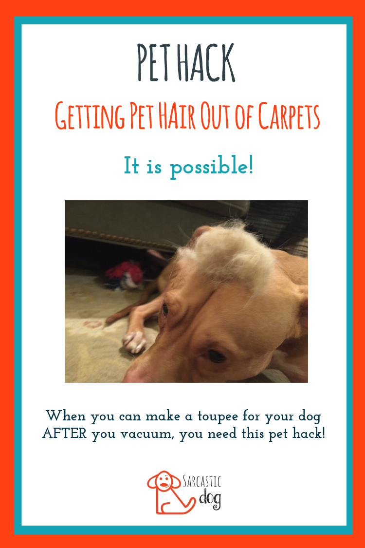 Clean Pet Hair Out Of Your Carpet With This Pet Hack From Sarcastic Dog Carpet Cleaning Solution Carpet Cleaning Quote Carpet Cleaning Pet Stains