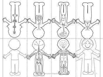 Human Body Systems Foldable Aparatos Del Cuerpo Humano Sistemas