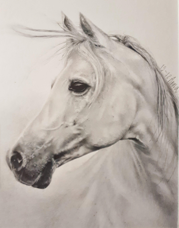 Ritratto personalizzato cavallo bianco disegni da foto quadro realistico disegni a matita for Disegni di cavalli a matita