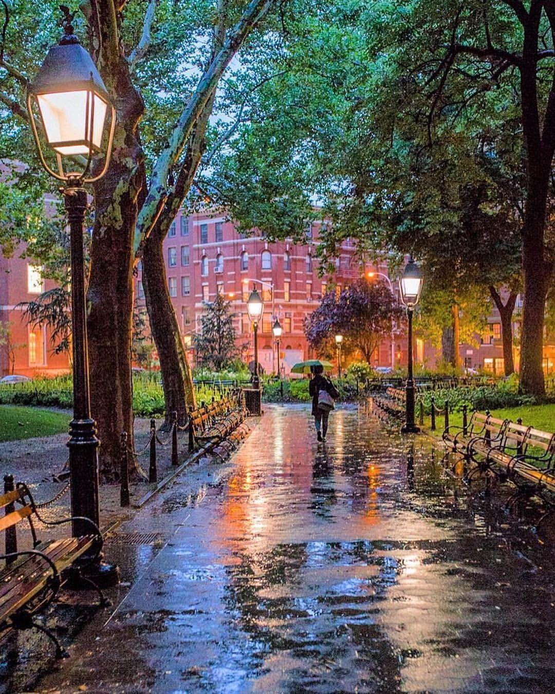 попытки подследственного красивые картинки вечернего дождя растение свисающими