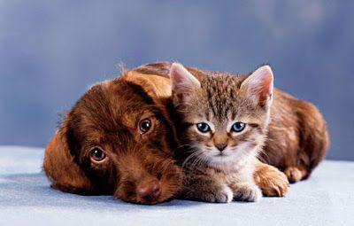 perros o los gatos