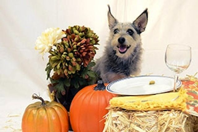 Thanksgiving Food Your Dog Can T Eat Pet Safety Dog Thanksgiving Safety Pet Holiday