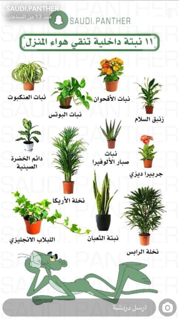 Pin By Sousou A On نباتات House Plants Decor Fairy Garden Diy Plant Decor