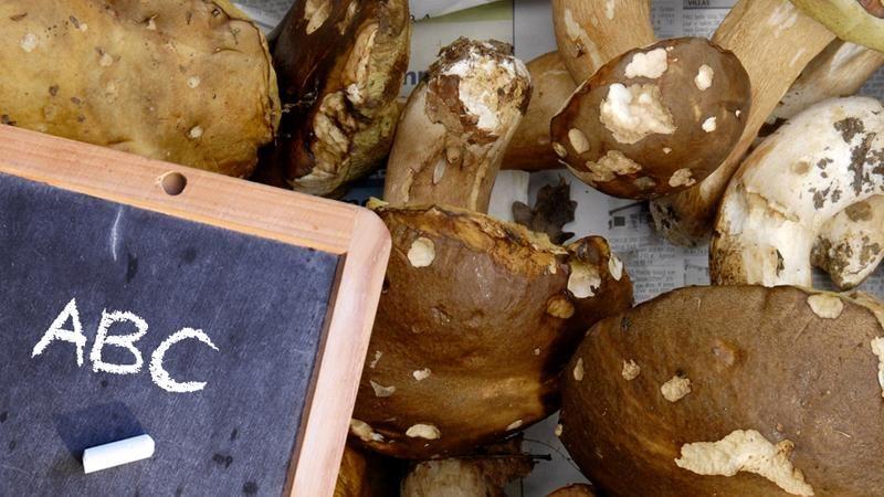 Bildergalerie Diese Pilze Kann Man Essen In 2020 Pilze Essen Bildergalerie