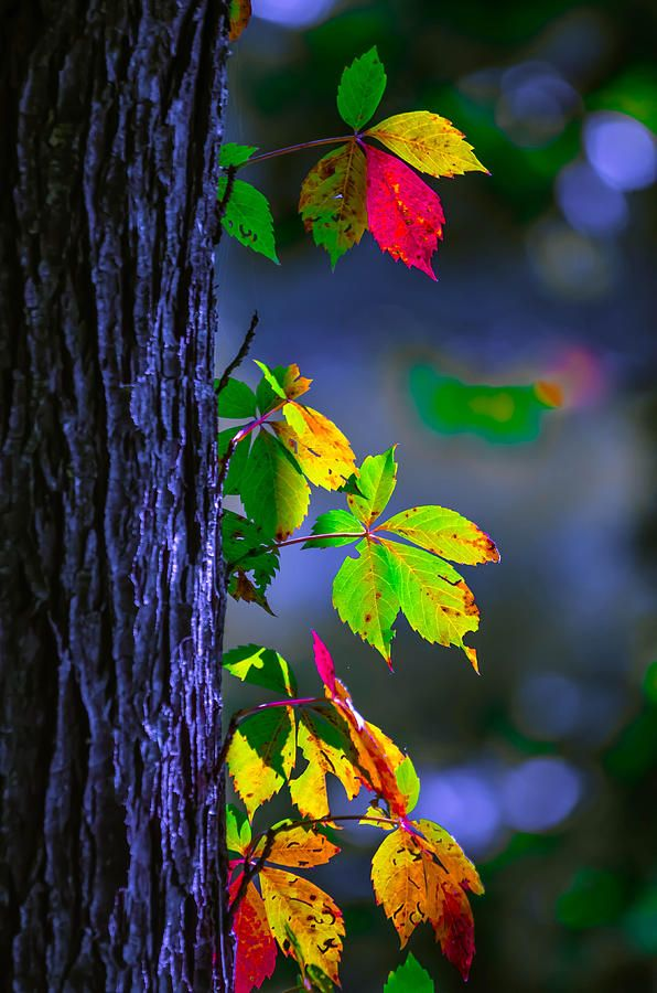 Luminous Leaves By Brian Stevens Photo Background Images Nature Pictures Background Images