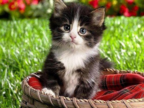 Süße Bilder Zum Runterladen kostenlose wallpaper zum runterladen http 1pic4u com