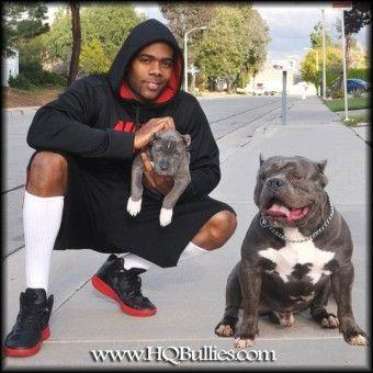 Mario Barrett Google Search Pitbull Puppies For Sale Pitbull