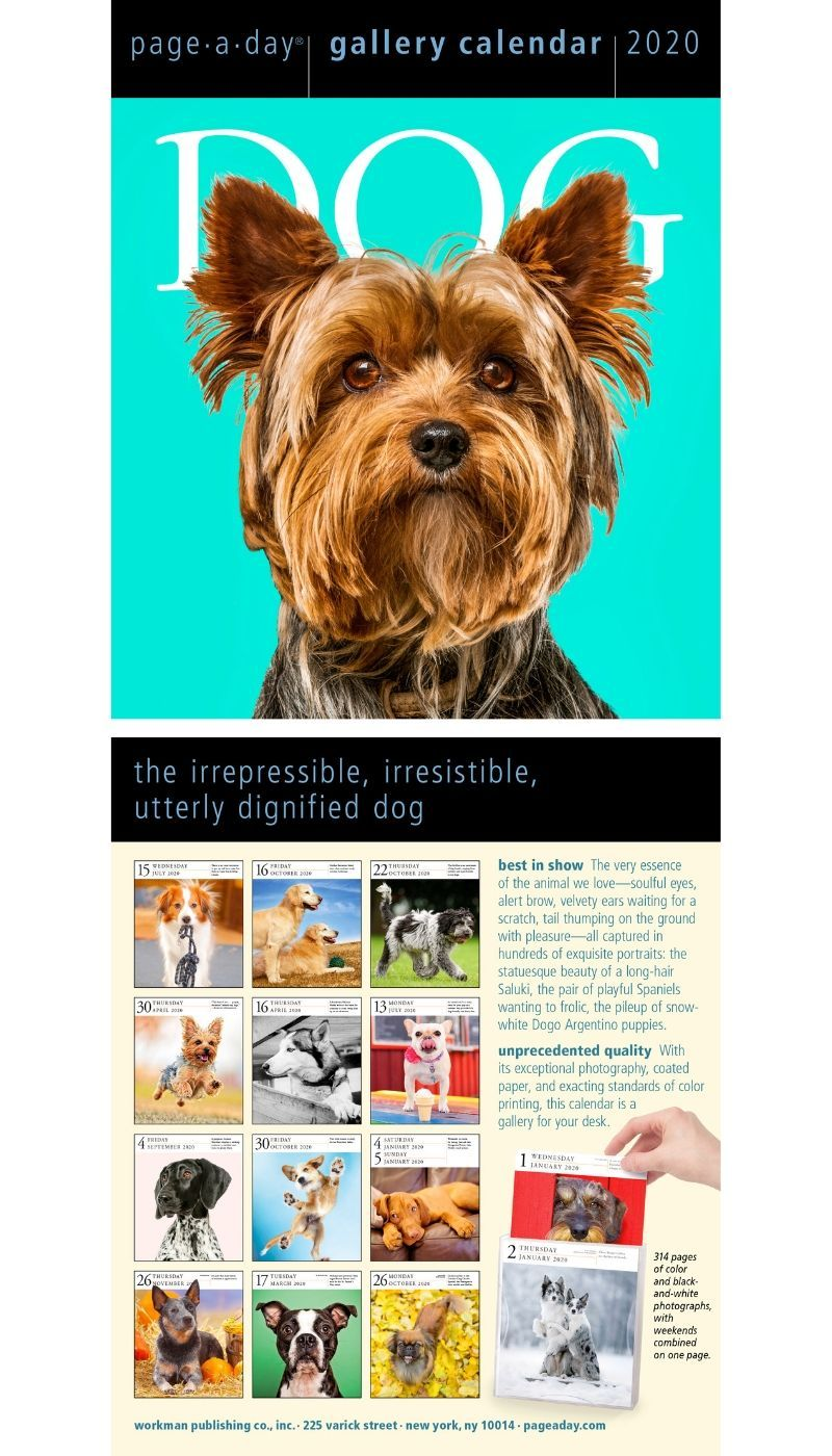 Dog Page A Day Gallery Calendar 2020 Dog Calendar Dogs Dog