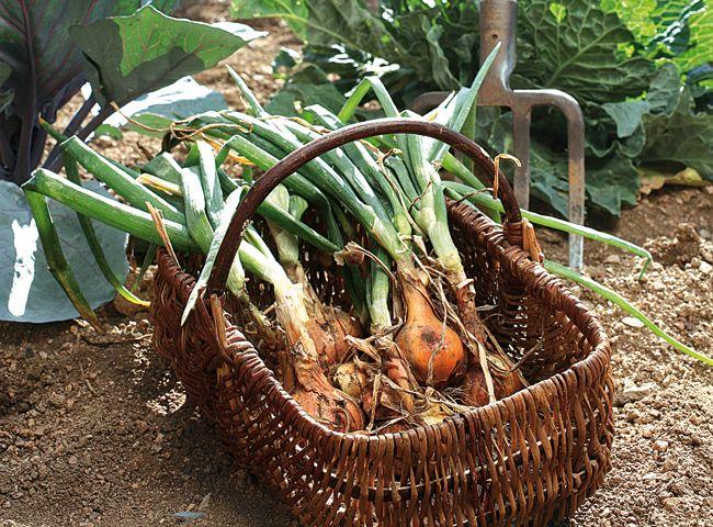 Épinglé sur Jardinage en pots et autres
