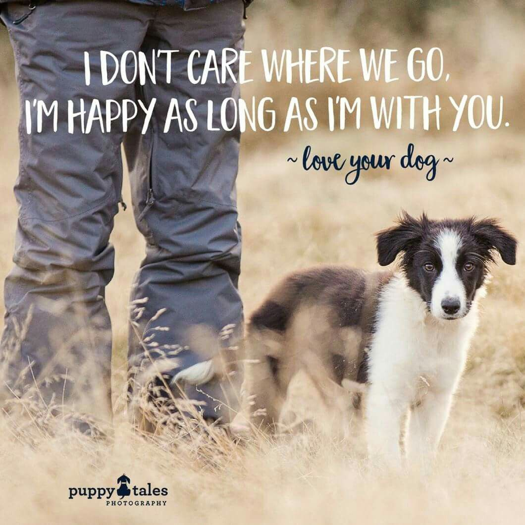 Quotes About Dog Friendship Pincandy Schwan On Dogs  Pinterest  Dog