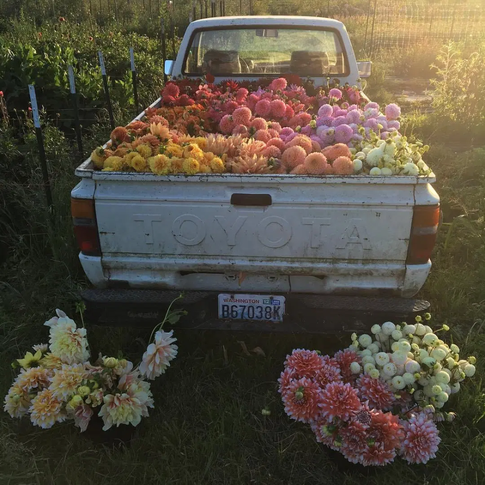 Thanksgiving Flowers Cococozy In 2020 Thanksgiving Flowers Flower Truck Flower Cart