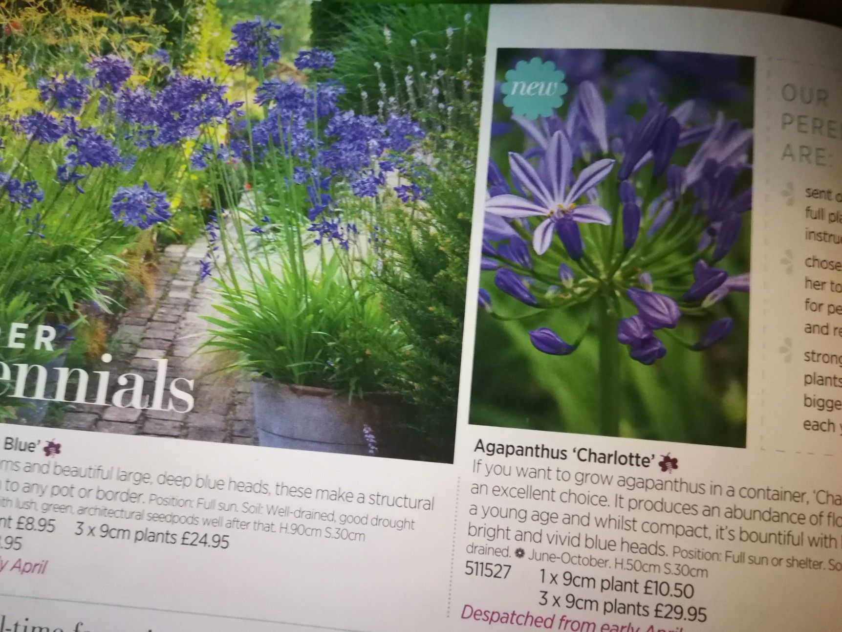 Pin By Jennifer Compton On Flowers In 2020 Plants Agapanthus Flowers