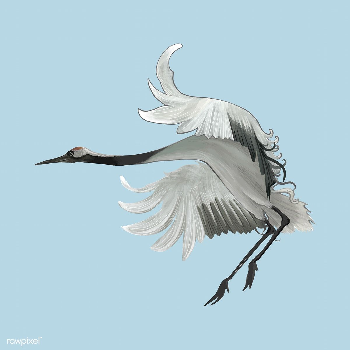 Download Premium Vector Of Elegant Japanese Red Crowned Crane Flapping Its Japanese Crane Flying Bird Silhouette Illustration