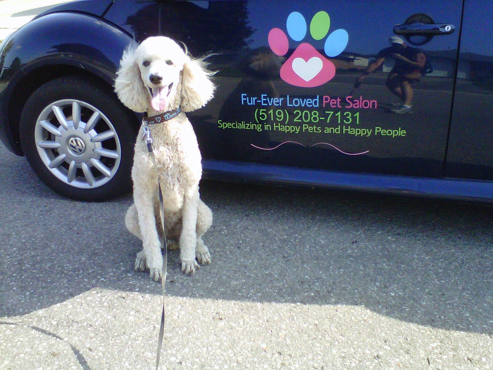 Pin On Dog Grooming Business Marketing