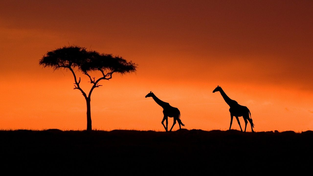 Masai Mara National Park Kenya Africa Truly One Of The Most