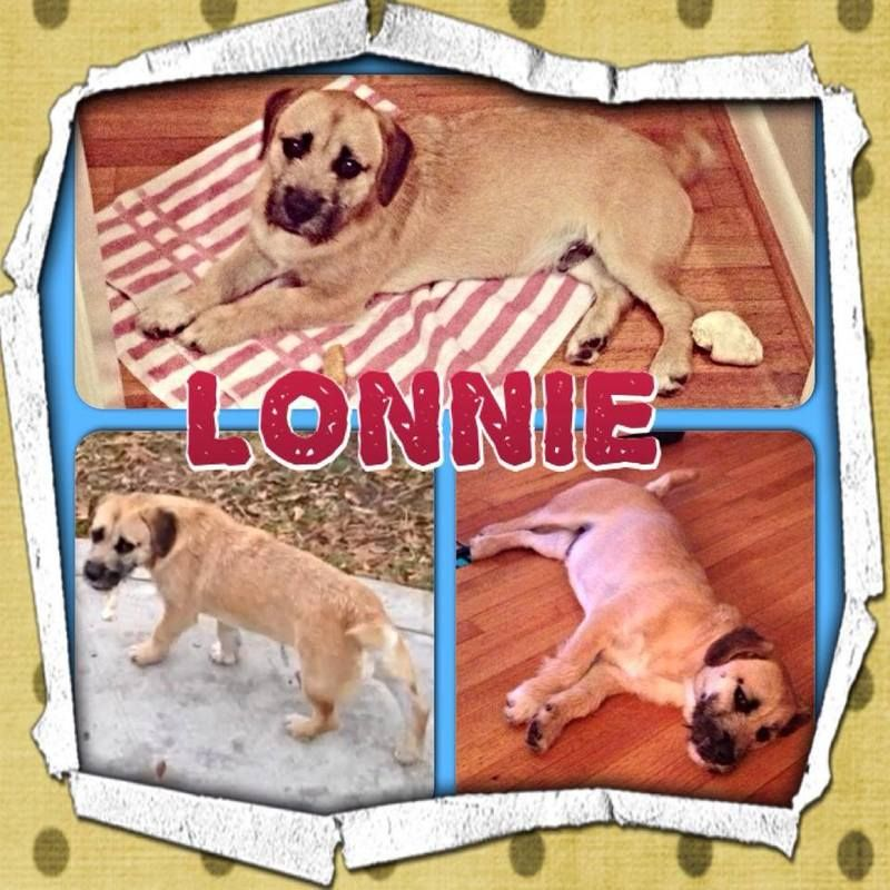 Houston, TX Hi! I'm Lonnie! I was found running around the mean streets of Houston and was eventually picked up and taken to the Harris Co...