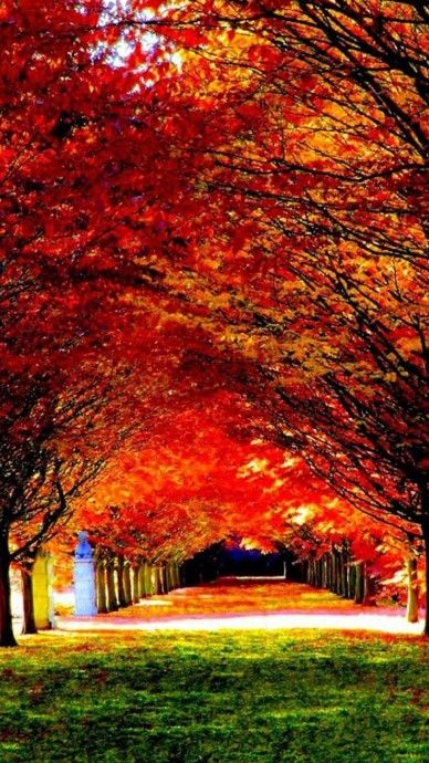 Nature Red Trees Road Iphone 6 Wallpaper Click For Original Size Nature Iphone Wallpaper Hd Nature Wallpapers Nature Wallpaper
