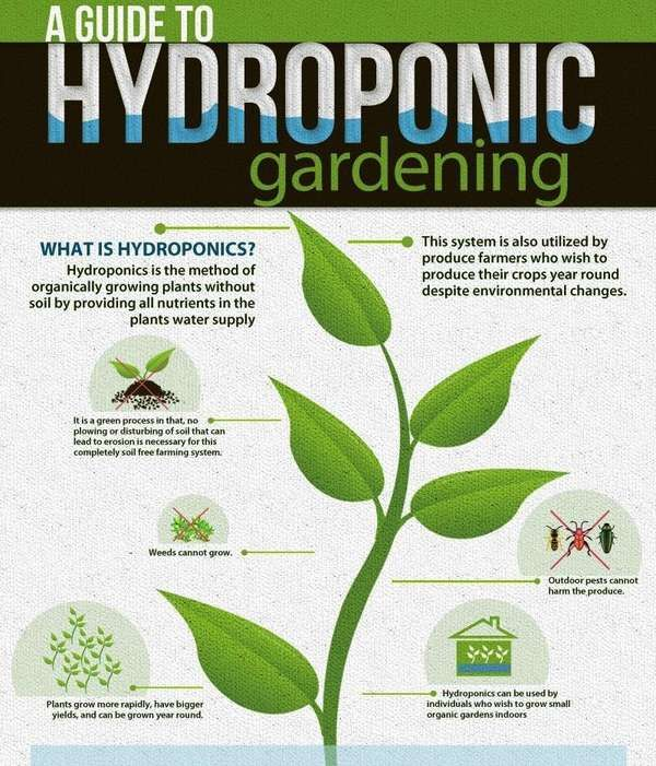 17 Best 1000 images about Home Hydroponics on Pinterest Gardens