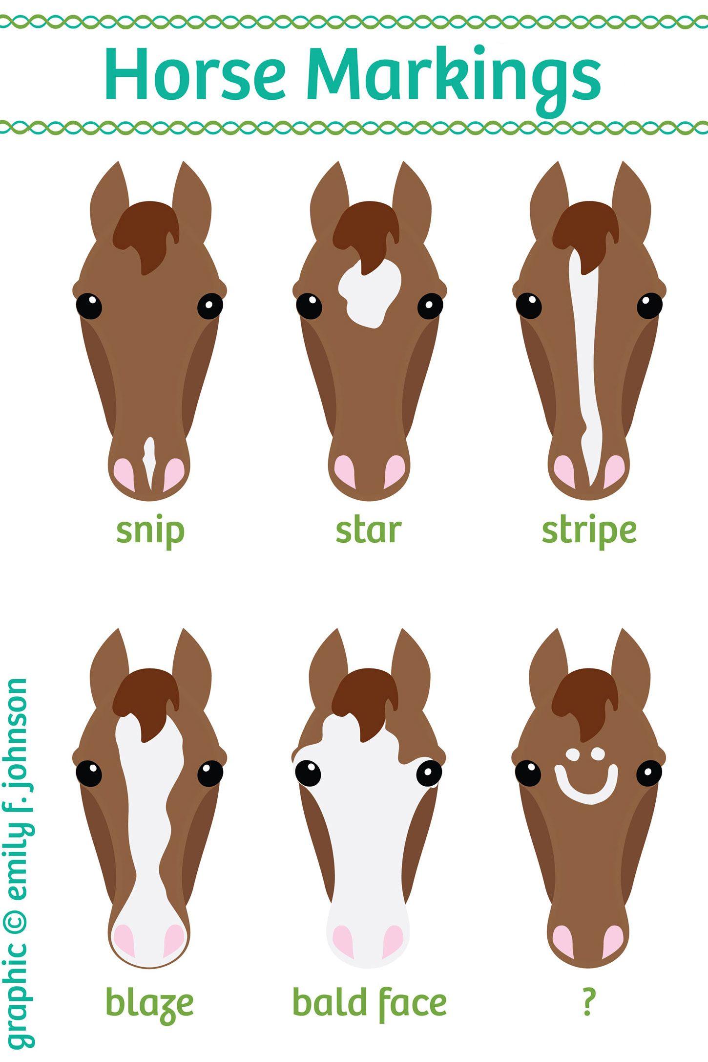Horse Face Markings Chart