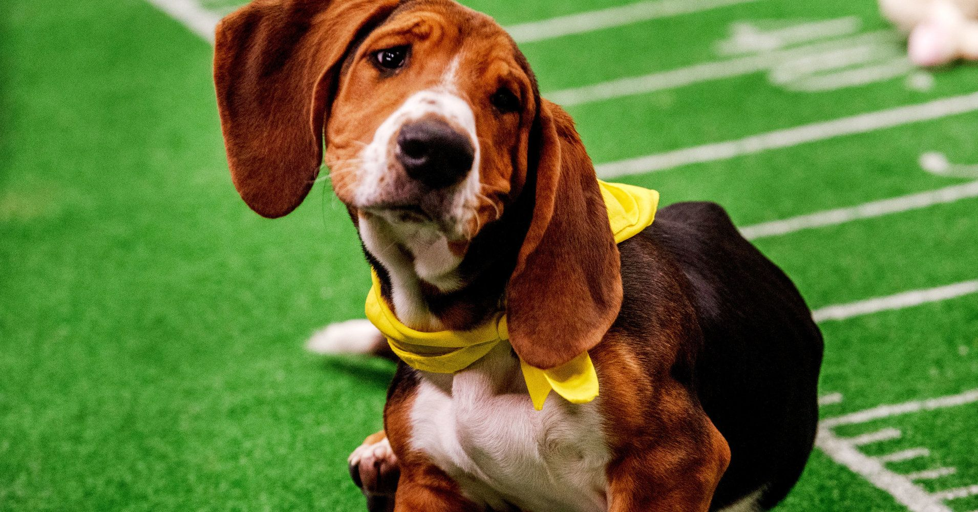 Go Behind The Scenes Of Puppy Bowl XV In These OhSo