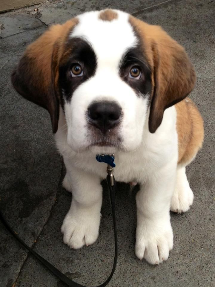Posted on Reddit | Animals | Dogs, Cute animals, Dogs, puppies