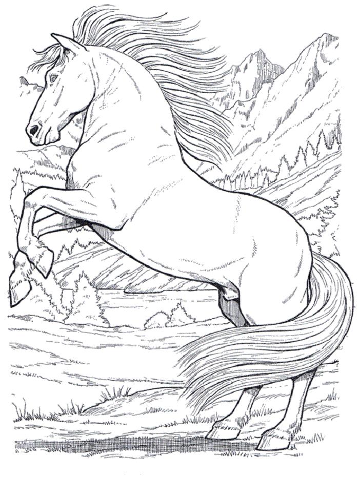 schöne ausmalbilder pferde 02 | ev | Pinterest | Schöne ausmalbilder ...