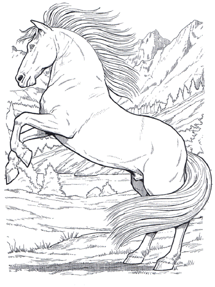 Schone Ausmalbilder Pferde 02 Ausmalbilder Pferde Pferde Bilder Zum Ausmalen Ausmalbilder