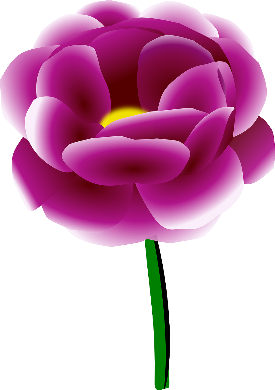 Peony flower spring plant transparent image flower pinterest