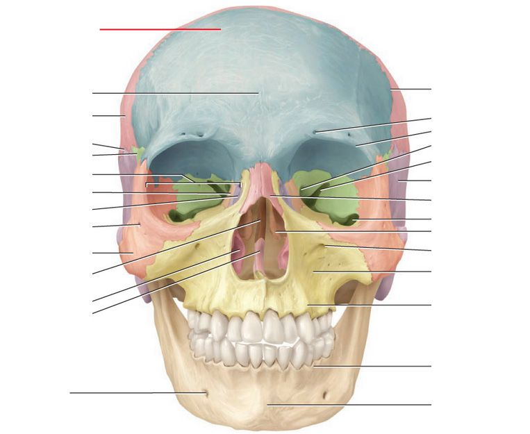 Cranial bones and markings flashcards proprofs anatomy cranial bones and markings flashcards proprofs ccuart Images
