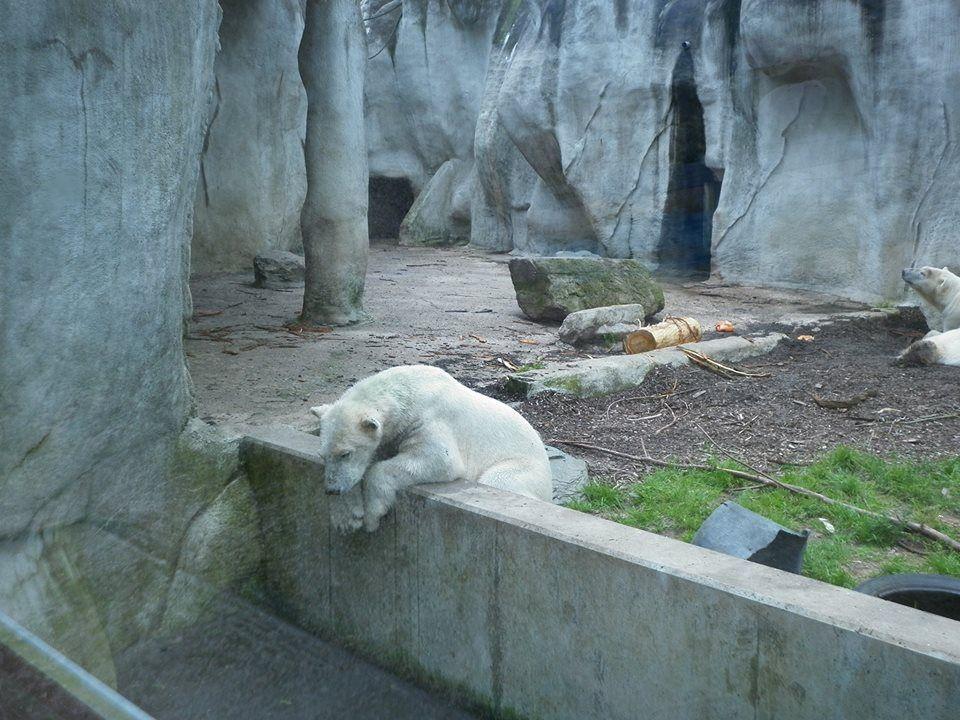 Ouwehands dierenpark, Rhenen.