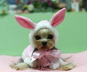 que bonito un gatín disfrazado de conejito