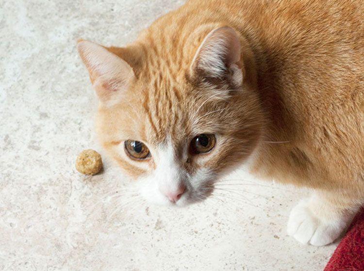 3 DIY Cat Treat Recipes Cat treats, Cats, Oat flour