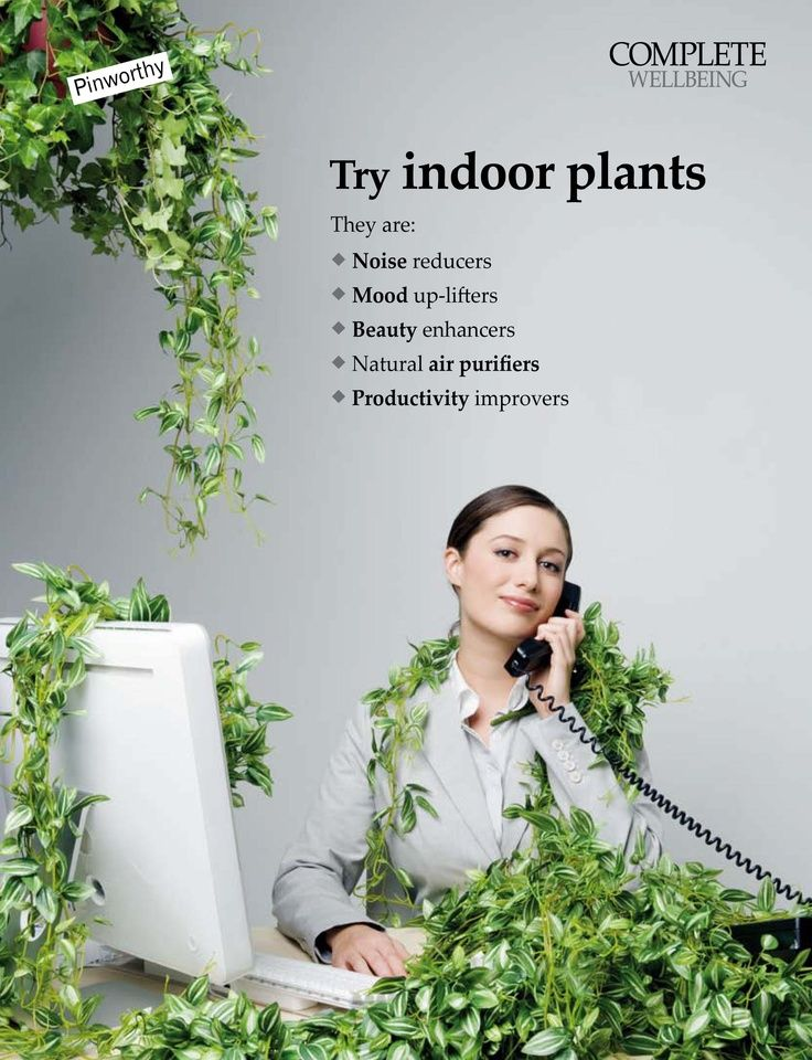 Benefits of indoor plants air pollution Benefits of