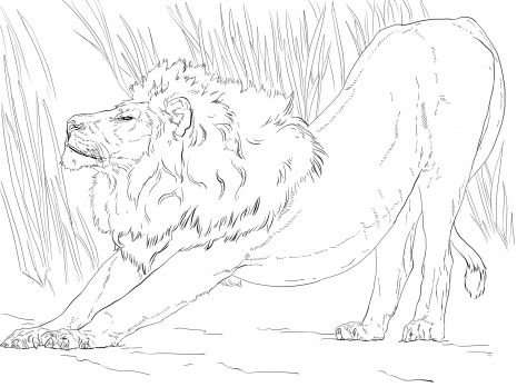 Stretching Lion Coloring Page Super Coloring Lion Coloring Pages Free Printable Coloring Pages Animal Coloring Pages