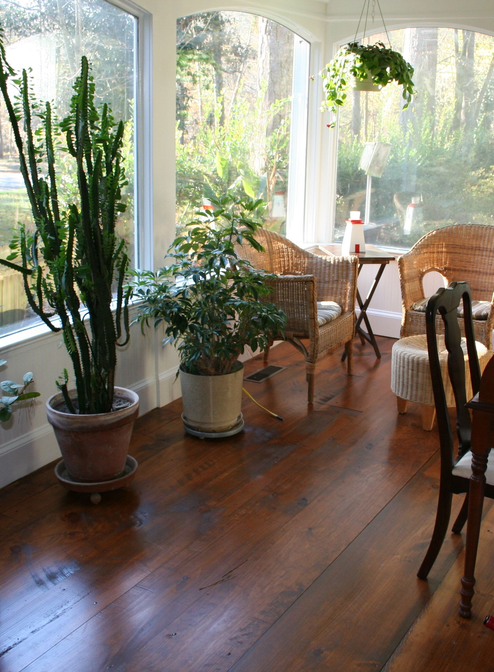 Eastern White Pine Flooring in a Dining Room in 2020