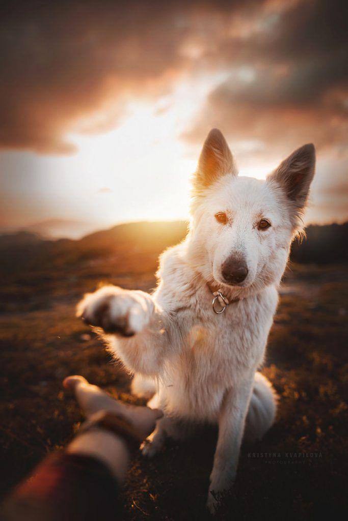 Photo of Kristýna Kvapilová's Favorite Dog Photos – Different