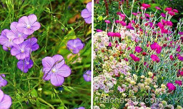 Многолетние цветы для сада неприхотливые