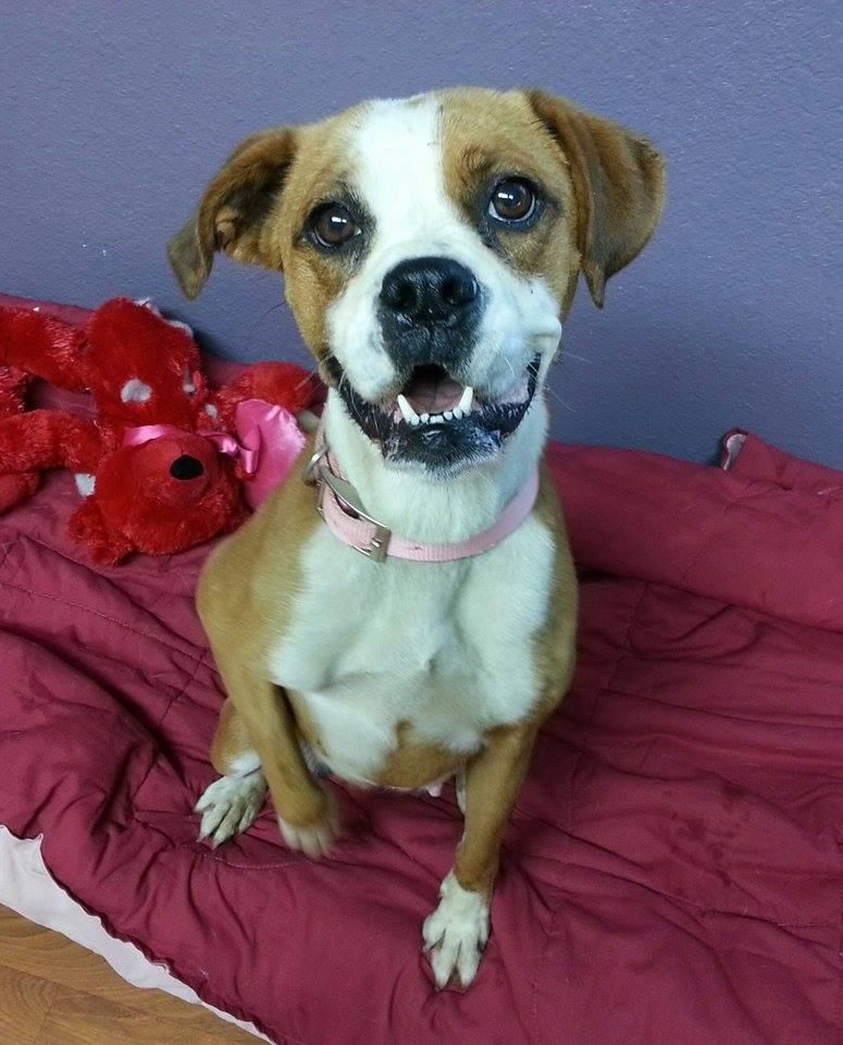 Adopt Boo Boo on Pet adoption, American animals, Pets