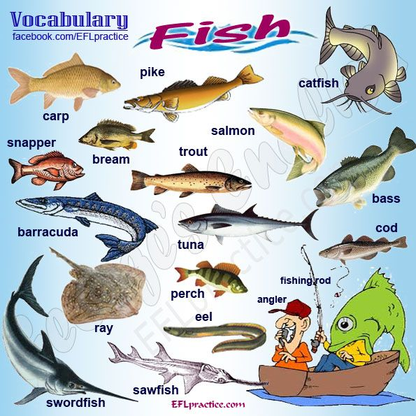 Pin by George's English on Vocabulary pictures | Pinterest | Fish ...