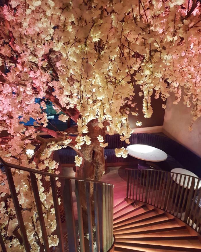 Cherry Blossom Tree At Kym S Tree Restaurant Tree Interior Pink Trees