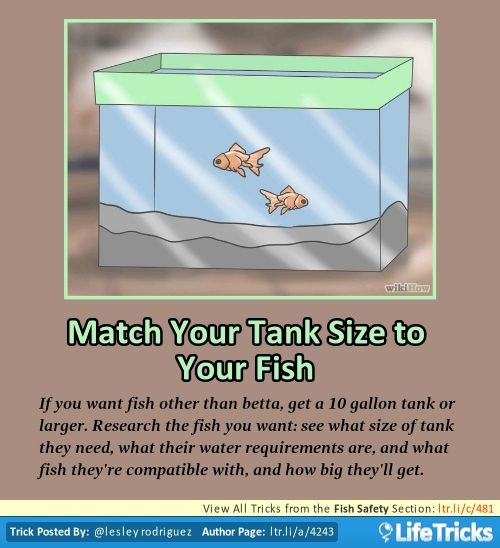Fish safety match your tank size to your fish bettas for Betta fish size