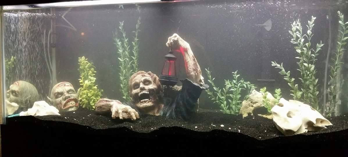 Bearded Dragon Decor Images Dr On Enclosure S & Bearded Dragon Tank Decor Ideas u2013 Best Decoration Ideas 2018