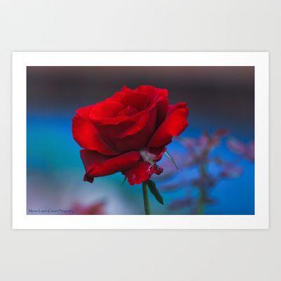 Red Rose Art Print by Marisa Lopez-Cruzan - $13.52