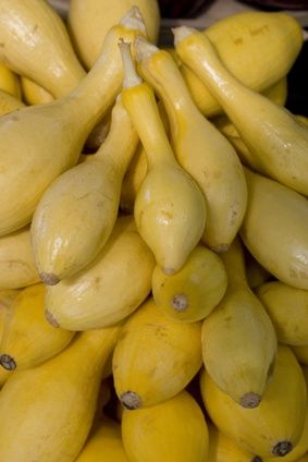 How to Grow Summer Squash on a Trellis | List of ...