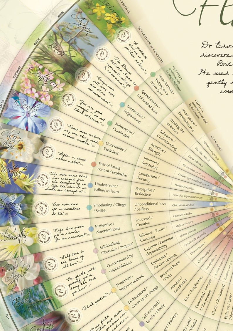 Bach Flower Poster Wall Chart For The 38 Essences A1 Etsy In 2020 Bach Flowers Bach Flower Remedies Flower Essences