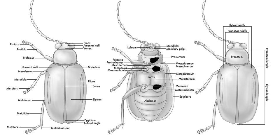 anatomy image   vis comm proj 2   Pinterest