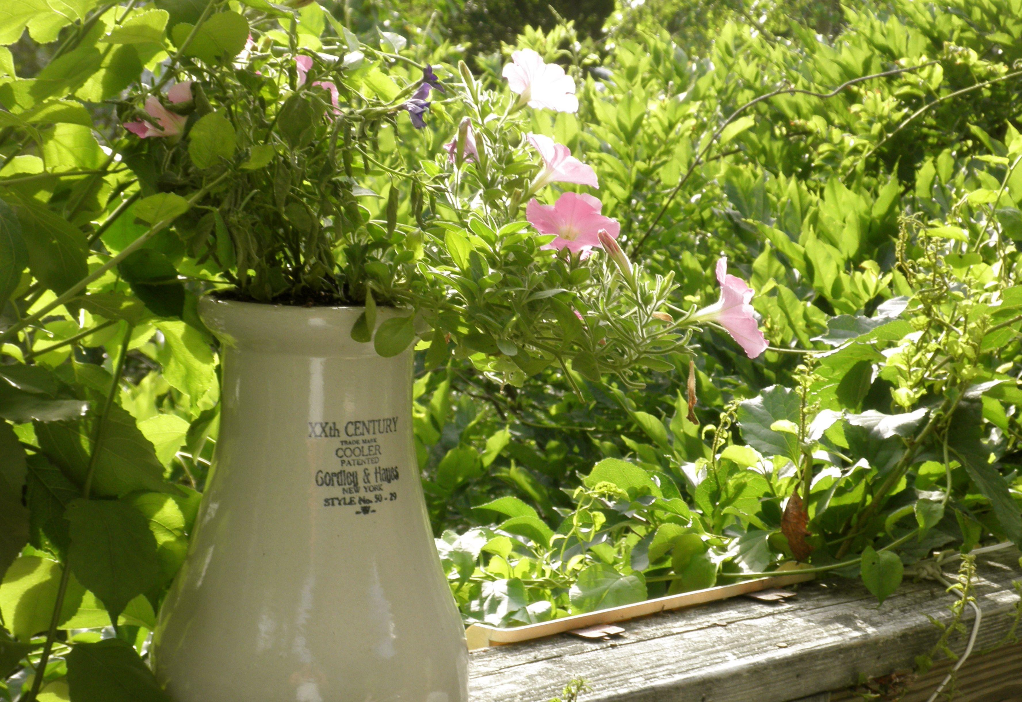 flowers on my deck...